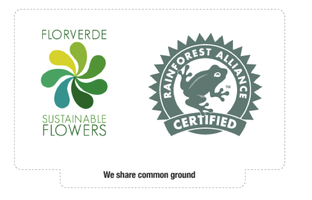 General comparisons between Florverde Sustainable Flowers and Rainforest Alliance Certified