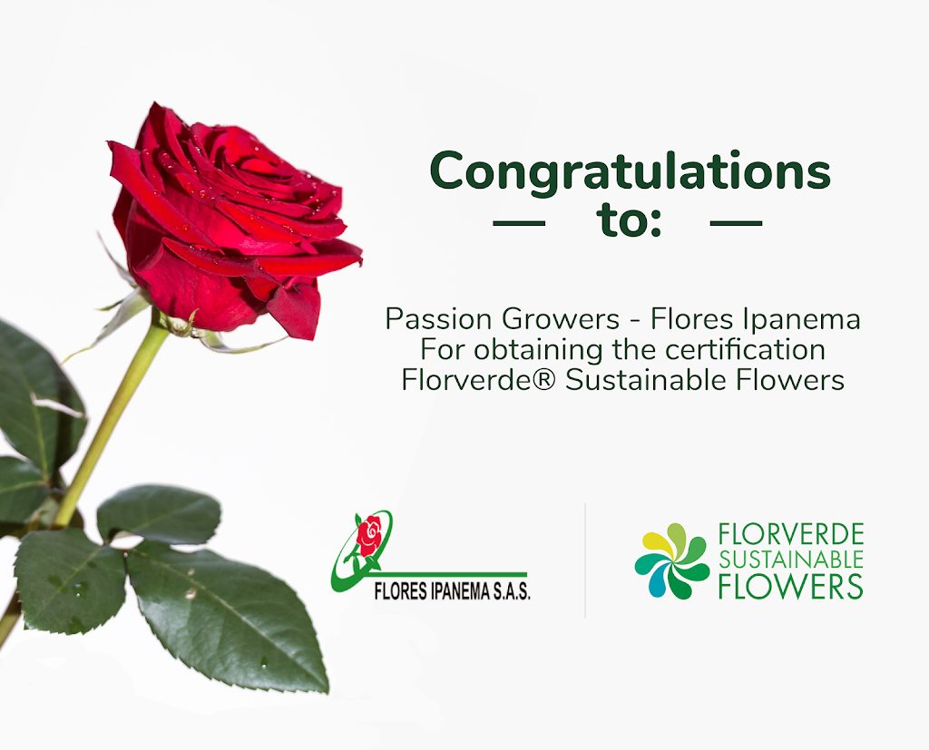 Roses, roses, roses – FSF certified even better!