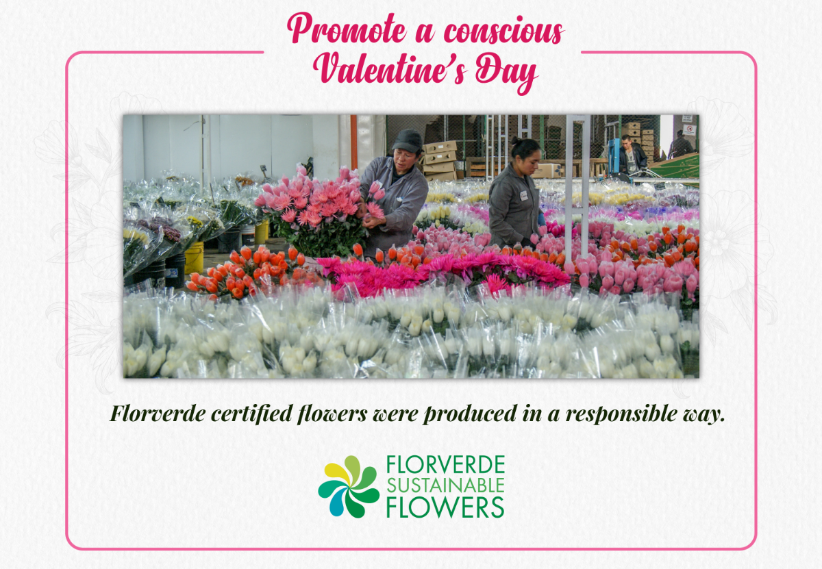 Promote a conscious Valentine's day! Look for the Florverde Sustainable Flowers label.